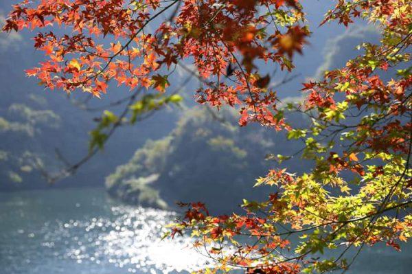 紅葉とダム湖